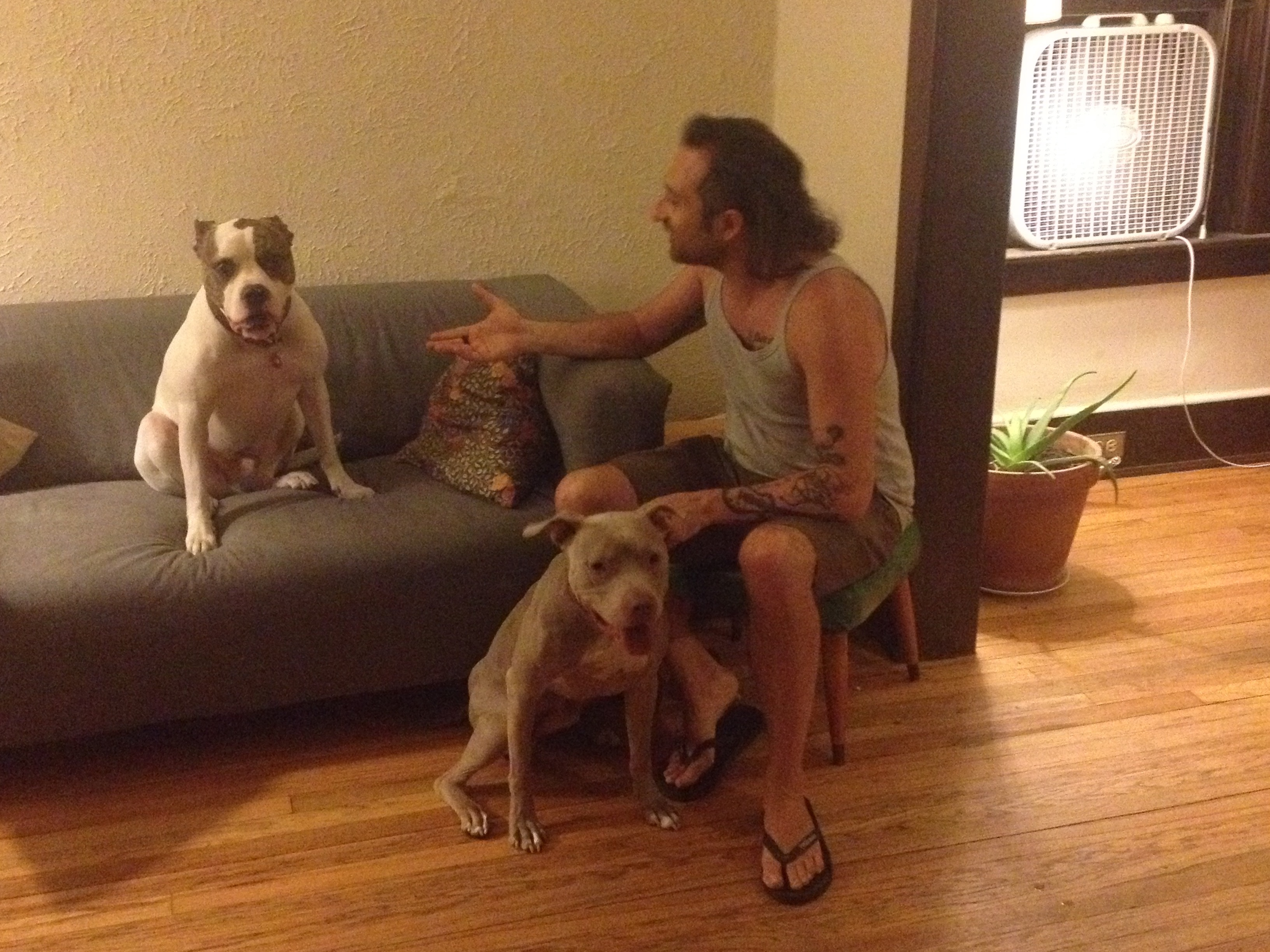 Simone & the dogs