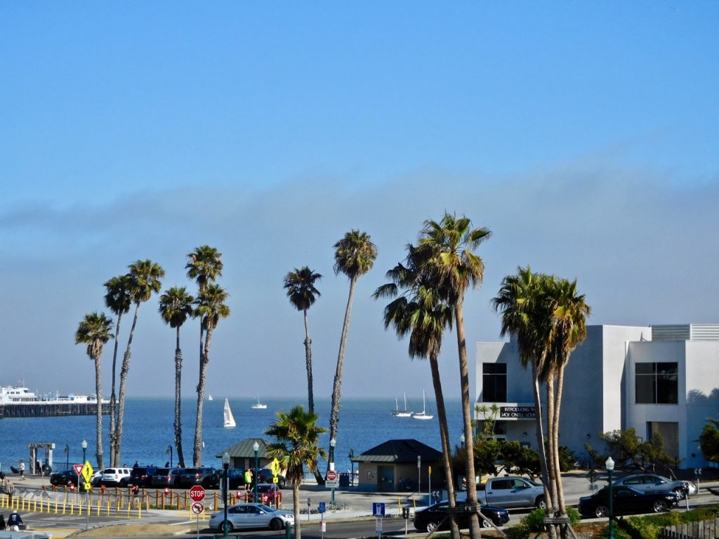 Palm Trees Santa Cruz Photo Diary