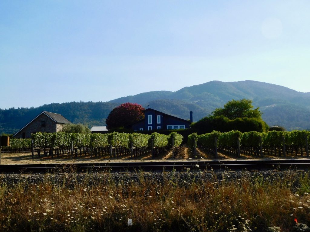Napa: last leg on our Californian road trip