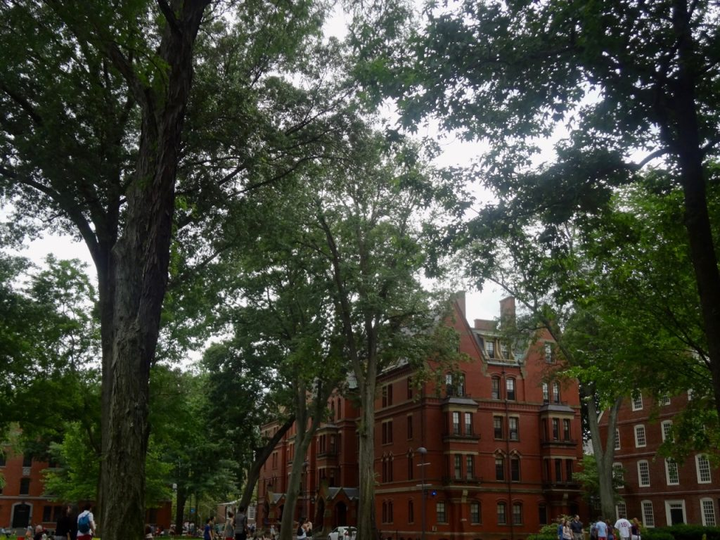 Beautiful University of Harvard