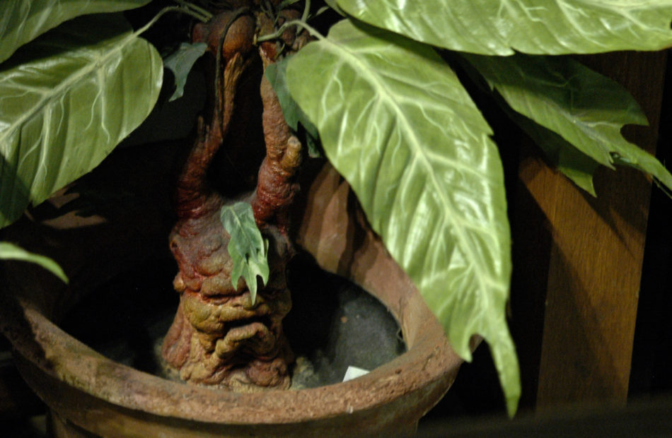 Harry Potter Warner Bros Studio Mandrake in a pot