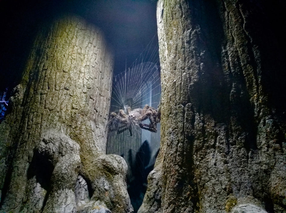 Spider in the Forbidden Forest at the Harry Potter Studios in Leavesden