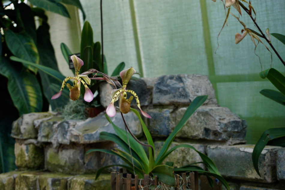 2 beautiful orchids at the Montreal Botanical Garden