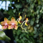 Espace pour la vie : Jardin botanique et Planétarium à Montréal