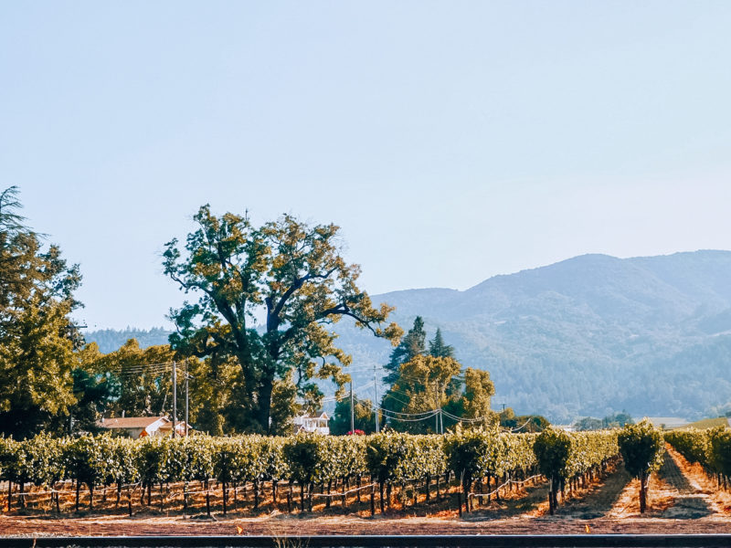 Napa Valley vineyards on our California Road Trip Itinerary
