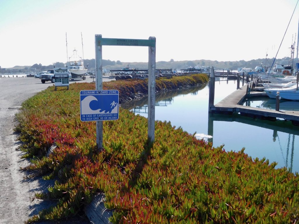 Cute Bodega Bay on our road trip in Northern California