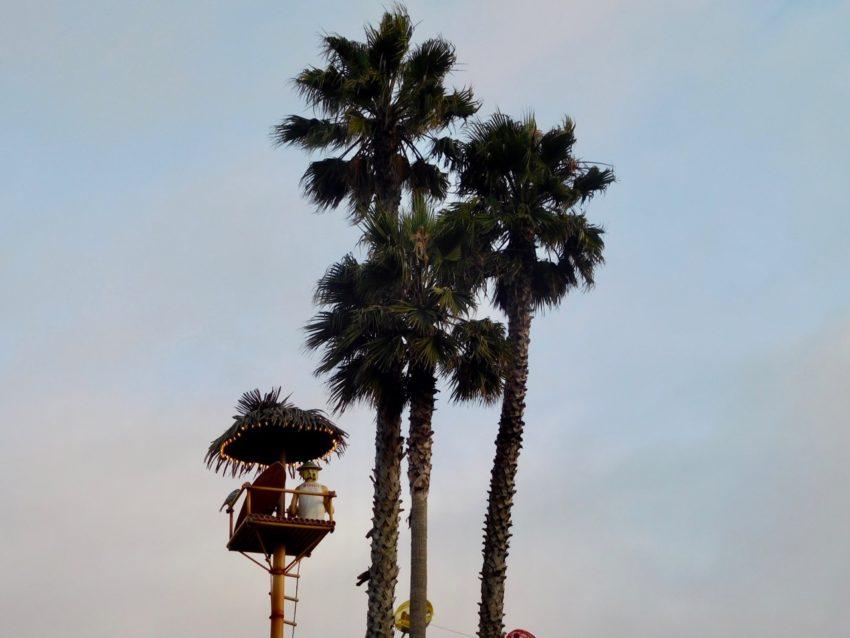 A few days in Santa Cruz - Palm Trees at Boardwalk Amusement Park [01]