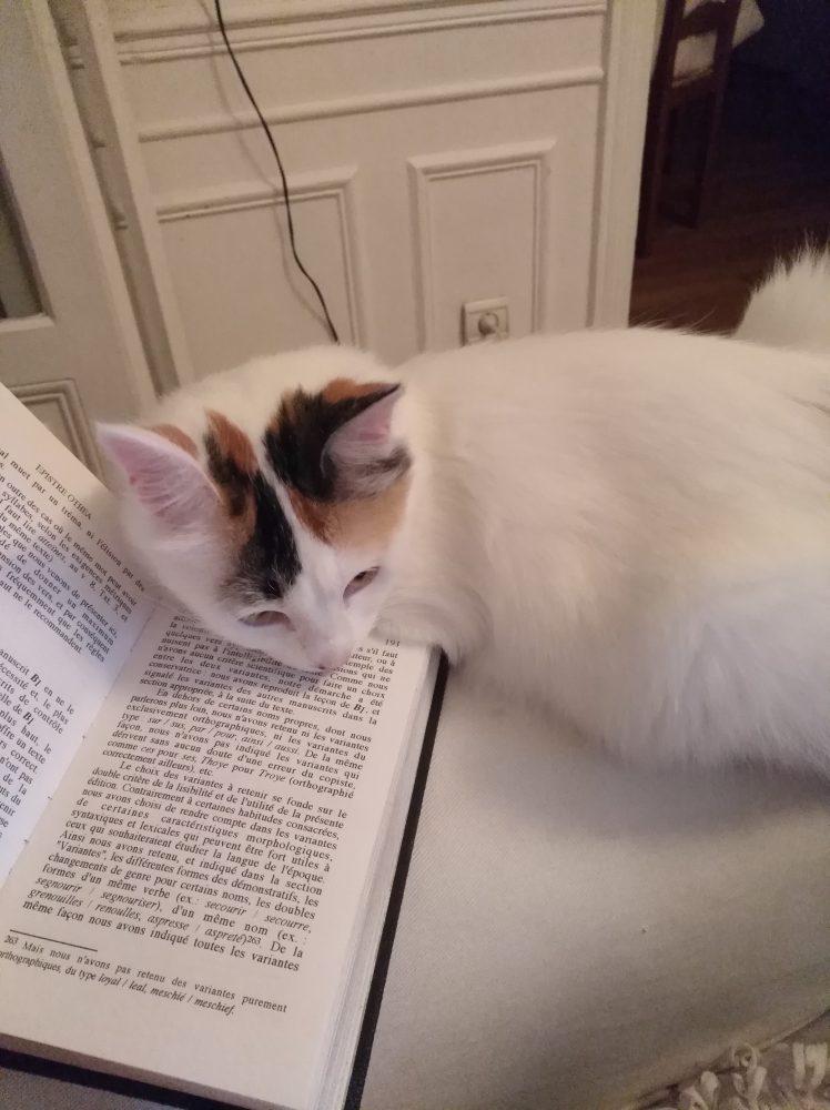 Catsitting white kitty in Paris surburb 2017