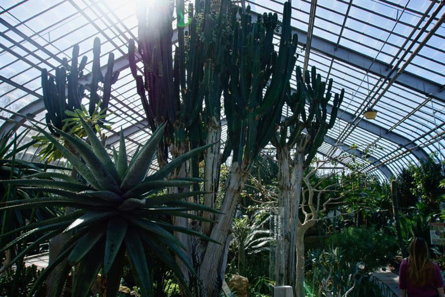 Plants from the arid desert at the Montreal Botanical Garden