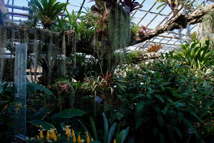 Tropical rainforest at the Montreal Botanical Garden
