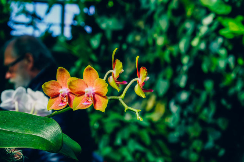Another beautiful orchid at Montreal Botanical Gardens
