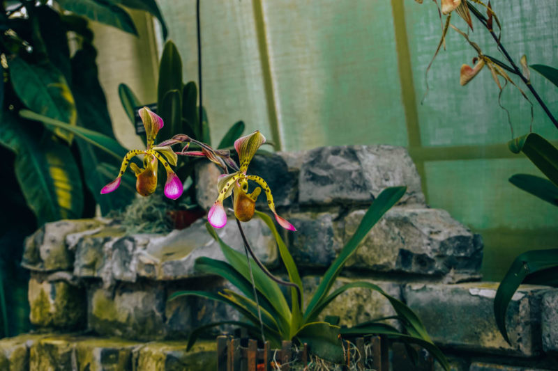 Gorgeous orchids at the Montreal Botanic Gardens