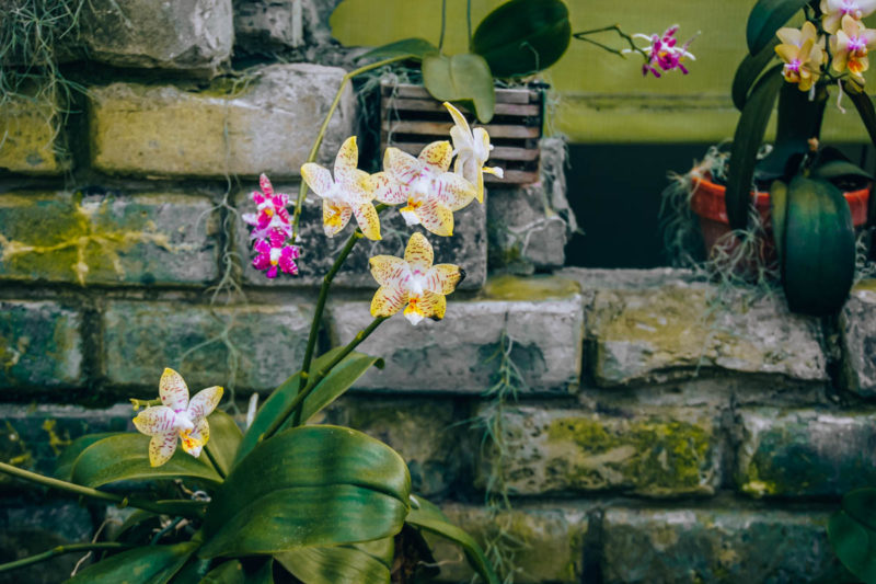 Orchids at the Montreal Botanic Gardens
