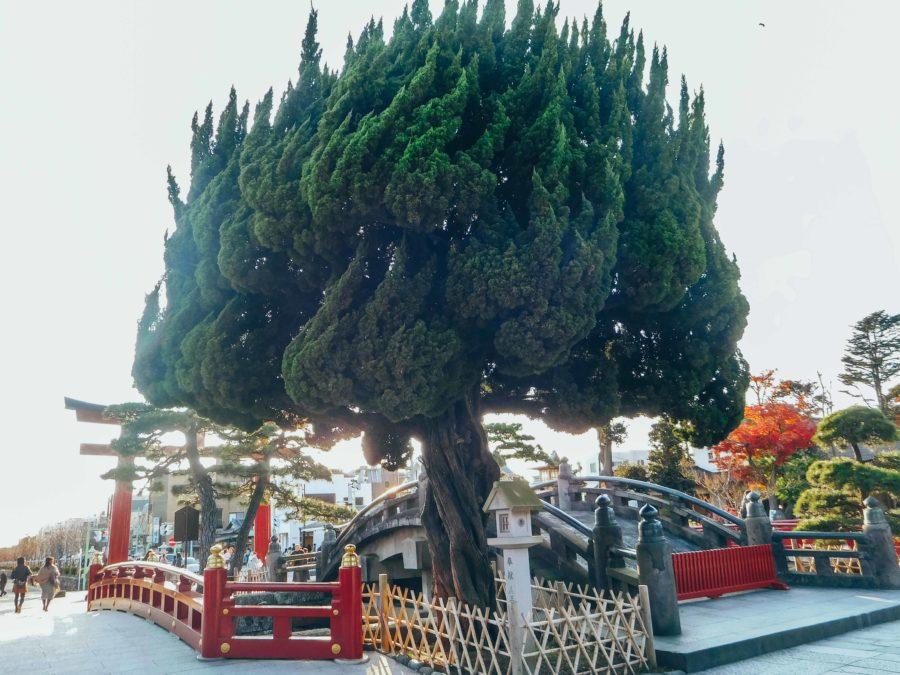Bridges of Tsurugaoka Hachimangu Shrine on a day trip to Kamakura