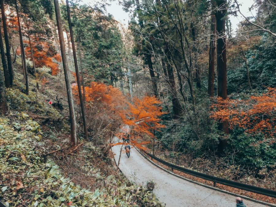 The hike on a day trip from Tokyo to Mount Takao
